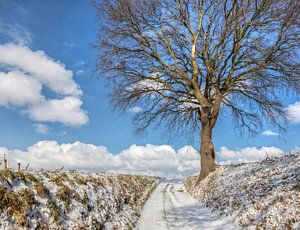 Winters landschap in Zuid-Limburg van