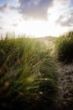Düne mit Strandhafer und untergehender Sonne. Naturfotografie von Frank van Hulst