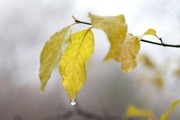 Herfstbladeren in de mist van Nel Diepstraten