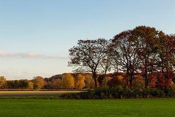 Herfstkleuren in de polder von Jani Moerlands