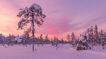 Roze gekleurde zonsondergang van Denis Feiner