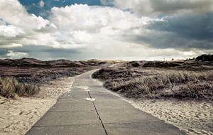 dunes - dünen von