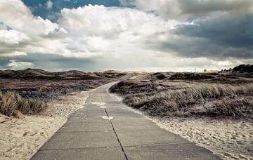 dunes - dünen van