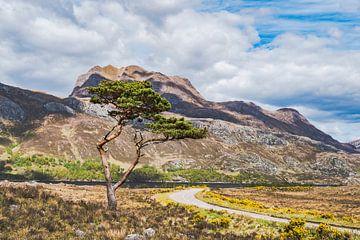 Kleurig landschap in de Schotse hooglanden van
