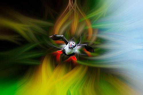 Papegaaiduiker fantasie
