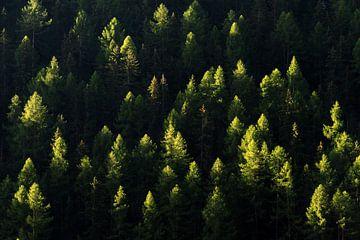 Ochtendlicht op bomen in de Zwitserse Alpen von Dennis van de Water