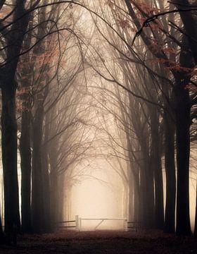 Portaal..... van Niels Tichelaar