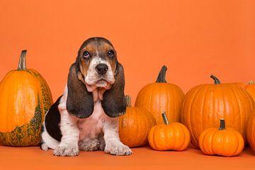 Basset pumpkin pup van Elles Rijsdijk