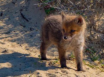 Ein Fuchsjunges ... junges Leben von Natascha Worseling