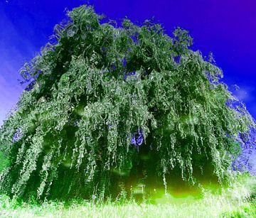 Tree Magic 94 van
