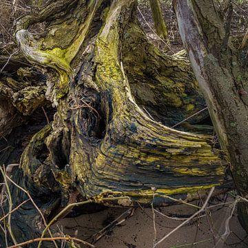 Wald am Fluss von Eugene Winthagen