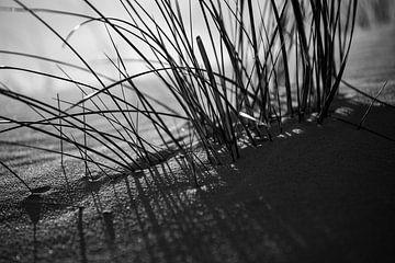 Marram-Gras von Rob Donders Beeldende kunst