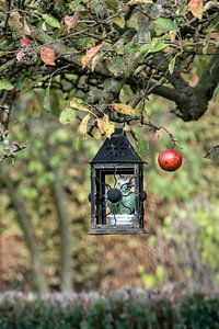 Herbstapfel von Nicole Bäcker