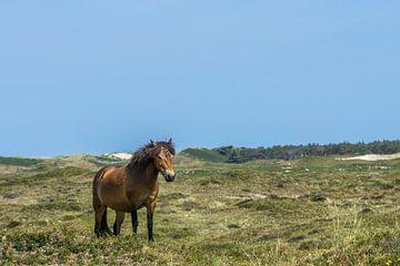 Exmoor op Texel van Joost Potma