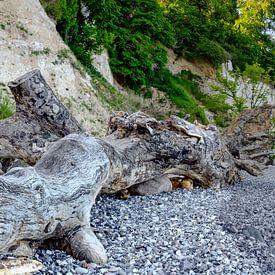Drijfhout op het strand van de Oostzee van Leopold Brix