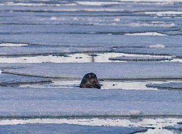 Abdichtung zwischen den Eisschollen von Merijn Loch