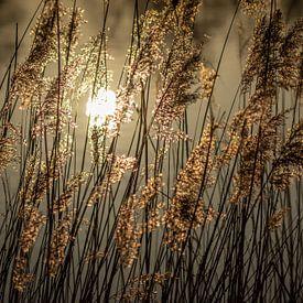 gouden licht van Hetwie van der Putten