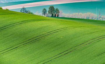 Green is the colour van Guy Lambrechts