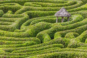 Labyrinthe du jardin Glendurgan, en Cornouailles