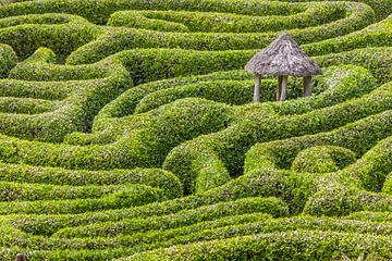 Doolhof in Glendurgan Garden, Cornwall van Christian Müringer