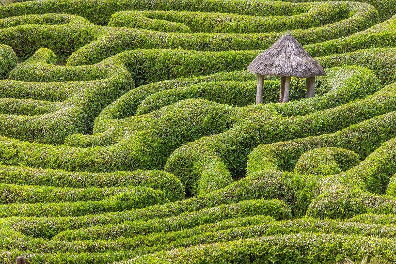 Labyrinthe du jardin Glendurgan, en Cornouailles sur Christian Müringer