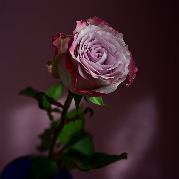'Lonely lilac Rose' van Roelina Holtrop