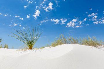 White Sands Impression sur Melanie Viola