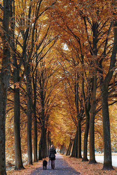 Herfst in Nederland van Lorena Cirstea