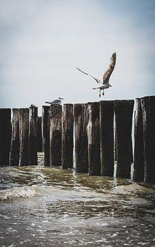 An der Küste von Katja • W