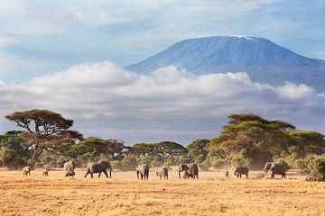 Afrikaanse olifanten (Loxodonta africana) kudde met de Kilimanjaro van Nature in Stock