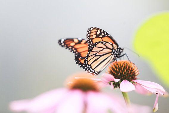 Monarch butterfly on flower van Mark Zanderink