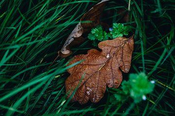 Bruin blad op het gras van Katrin Friedl