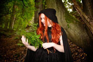 Het bosmeisje van Claudia Evans