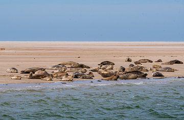 Seehunde des Wattenmeeres von Merijn Loch