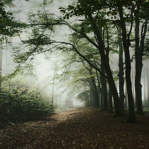 haunted forest van