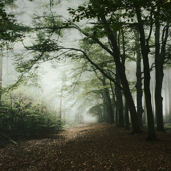 haunted forest van bob van den berg