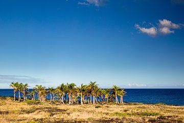 Palmenhain auf Hawaii