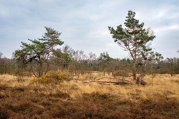 Bäume im Naturschutzgebiet von Johan Vanbockryck