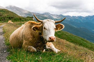 Alpenkoe || Reisfotografie Franse Alpen