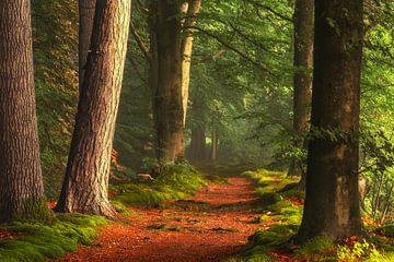 Pad van de Hobbits van Lars van de Goor
