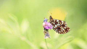Schmetterling auf eine rosa Blume von Yvonne Kruders