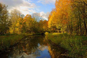 Herfst in de Hollandse Biesbosch van Michel van Kooten
