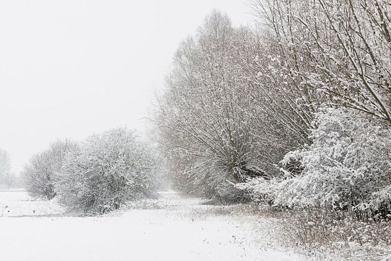 Onset of winter, snow covered bushes and trees