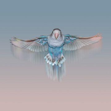 Vliegende lichtblauwe agapornis van Bianca Wisseloo