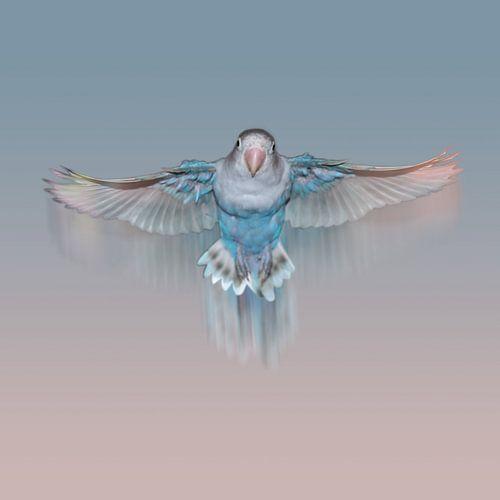 Vliegende lichtblauwe agapornis