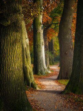 Herfst laan van Pascal Raymond Dorland