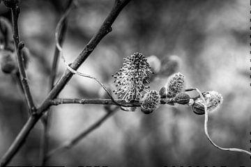Frühlingsblüte von Henry Oude Egberink