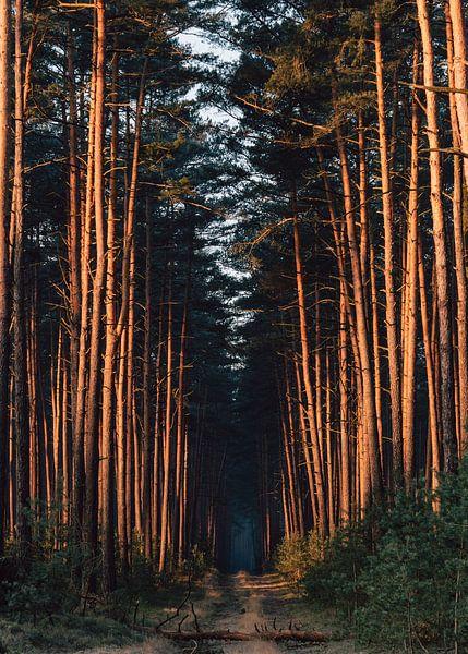 Forest road nr 33 van Jakub Wencek