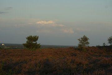 Heideveld  van Johan Mulder