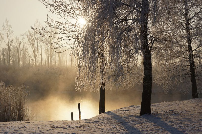 Winter in de Biesbosch van Michel van Kooten